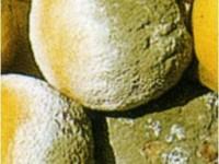 muffa verde2