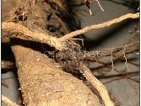 tessuti legnosi degenerati che si spezzano facilmente